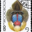 USSR - CIRCA 1984 Mandrill - Stock Photo