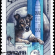 Stock Photo: HUNGARY - CIRC1982 Laika