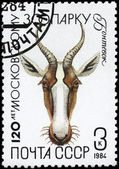 USSR - CIRCA 1984 Gazelle — Stock Photo