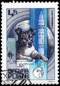 HUNGARY - CIRCA 1982 Laika — Stock Photo