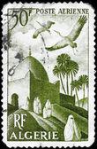 Algérie - circa 1949 cigognes sur mosquée — Photo