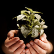 Stock Photo: Green plant in female hands on black