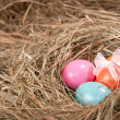 Easter eggs — Stock Photo #9205621