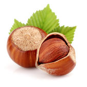 Dried hazelnuts with leaves — Stock Photo