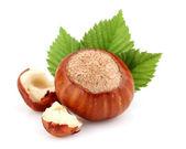 Hazelnut with cut kernel — Stock Photo