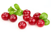Cranberry with leaves — Stock Photo