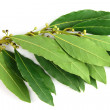 Bay leaves — Stock Photo