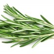 Stockfoto: Twig of rosemary
