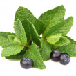 Peppermint with berry - Stock Photo