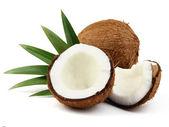 Kokosnöt med blad — Stockfoto