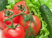 Tomato, cucumber and lettuce salad — Stock Photo