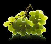 Weintraube, isoliert — Stockfoto