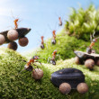 Car crash at ants races, ant tales — Stock Photo #10096007
