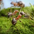 Stop! Deed of Hero, ant tales - Stock Photo