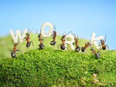 Team of ants constructing word work, teamwork — Stock Photo