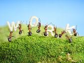 Team of ants constructing word work, teamwork — Стоковое фото