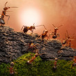 Defence of great wall, ants stories — Stock Photo