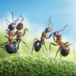 Ants dancing under the sun — Stock Photo