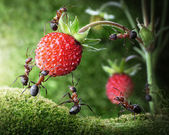 Team of ants picking wild strawberry, agriculture teamwork — Stockfoto