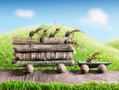 Team of ants carry wooden logs with trail car, teamwork, ecofriendly transp — Stock Photo
