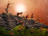 Defence of great wall, ants stories — Стоковое фото