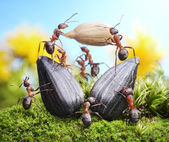 Team of ants harvesting sunflower crop, agriculture teamwork — Stock Photo