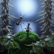 No monsters at Rotten Swamp!!  ants stories, thriller - Stock Photo