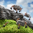 Team of ants costructing Great Wall, teamwork concept — Stock Photo