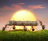 Team of ants carry log on sunset, teamwork concept — Стоковое фото
