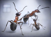 Ants play human situation of family scandal — Stock Photo