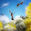Ants flying with crafty umbrellas - seeds of dandelion, ant tales — Stock Photo