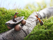 Lift, handsome! hitchhiking , ant tales — Stock Photo