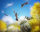 Ants flying with crafty umbrellas - seeds of dandelion, ant tales — Стоковое фото