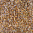 Seamless square texture - rusty metal closeup - Stock Photo