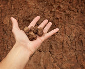 Hand with lumps of clay ground — Stock Photo