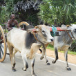 Bullock Cart — Stock Photo