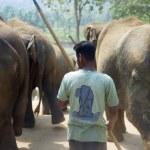 Pinnawela Elephant Orphanage — Stock Photo