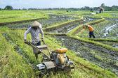 Trabajador del campo de arroz — Foto de Stock