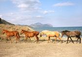 Stádo koní — Stockfoto
