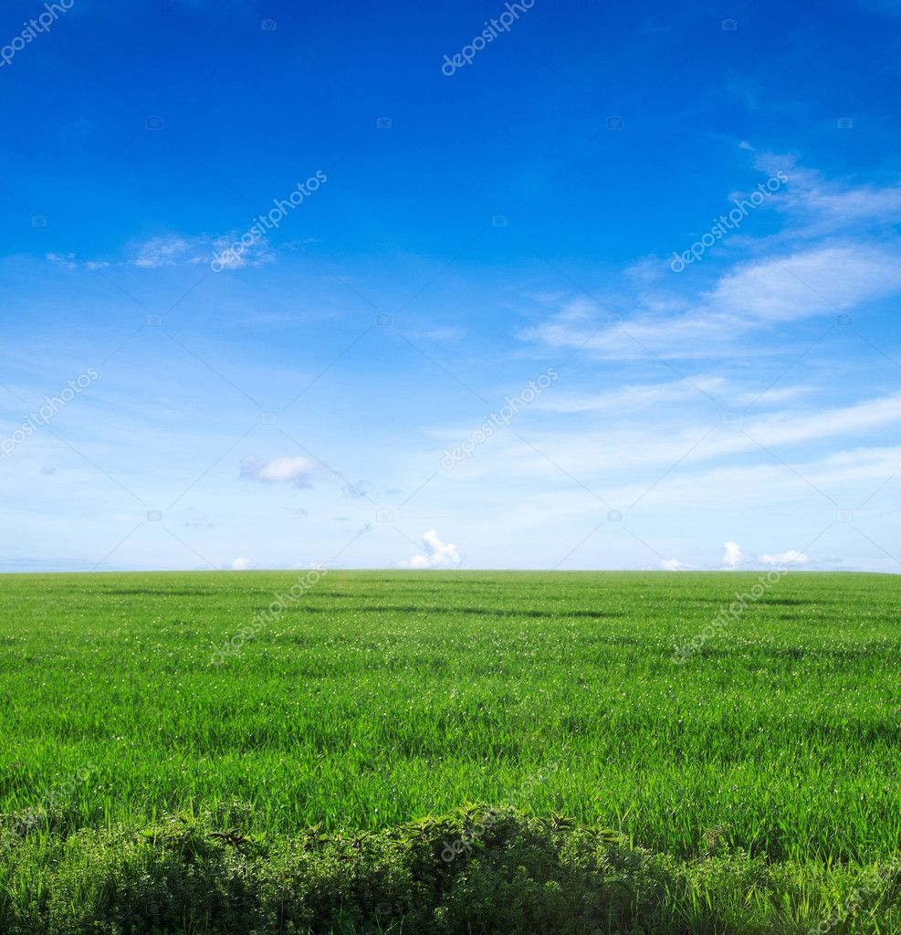 Field on a background of the blue sky — Stock Photo #10473106
