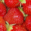 Strawberry — Stock fotografie