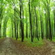 Green forest — Stock Photo #8589613