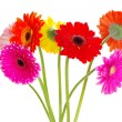 Stock Photo: Colorful gerberas