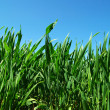 Green lawn — Stock Photo #8589814