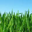 Green lawn — Stock Photo #8589817