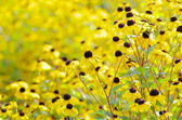 Fleurs sur champ — Photo