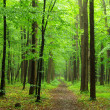 Green forest — Stock Photo #8774815
