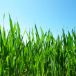 Green lawn — Stock Photo #8776051