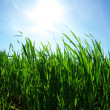 Green lawn — Stock Photo #8776062