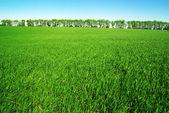 поле — Стоковое фото
